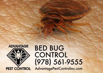 Bed Bug Control Topsfield, MA