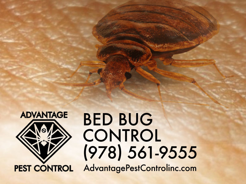 Best Bed Bug Exterminators Philadelphia