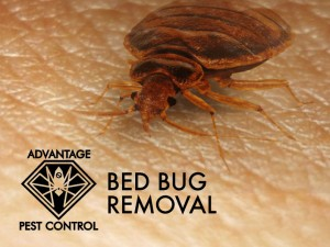 Bed Bug Exterminator Manchester by the Sea, Massachusetts