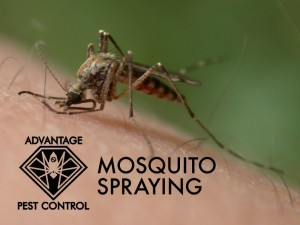 Mosquito spraying in Manchester by the Sea, Massachusetts zika virus
