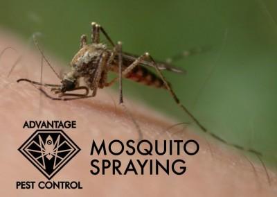 Mosquito spraying in Manchester by the Sea, Massachusetts zika virus
