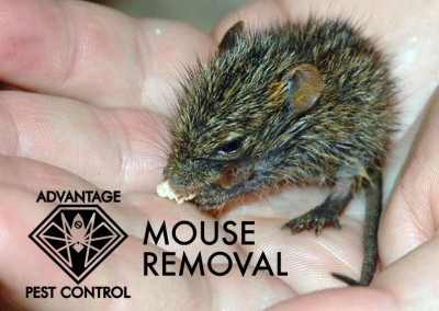 mouse-removal-ma