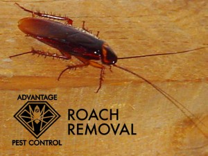 Roach removal in Manchester-by-the-Sea