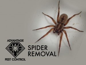 Spider exterminator in Manchester by the Sea