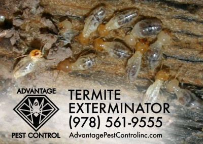 Termite inspection Topsfield, MA