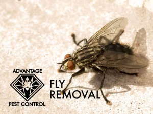 Fly exterminator Manchester-by-the-Sea