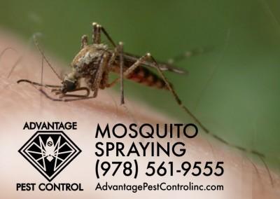 Mosquito Spraying Topsfield, MA