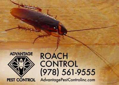 Roach Control Topsfield, MA