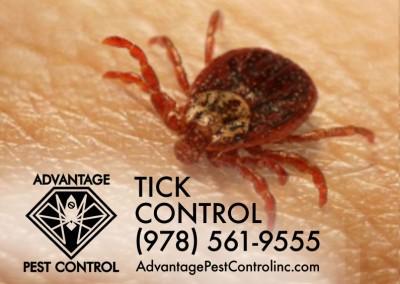 Tick Spraying Topsfield, MA