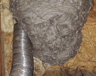 Wasp Nest Removed in Rockport, MA